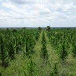 Energimyndigheten slutar klimatkompensera koldioxidutsläpp i Uganda