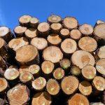 Debatt i Nerikes Allehanda: Länsstyrelsens rapport ren skogsnäringspropaganda
