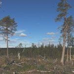 70 organisationer och 30 forskare i upprop till politiker och myndigheter: Stoppa omgående avverkningen av skogar med höga naturvärden
