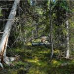 Öppet brev till Sveaskog: Följ Finlands exempel!