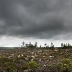 Debatt i Aktuell Hållbarhet: Dagens skogsbruk hotar skogen och klimatet