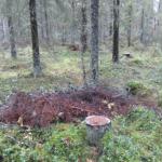 Kurs i Luleå: Skogsekologi och naturnära skogsbruk