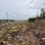 Södra har avverkat nyckelbiotoper och skog i reservatsförslag vid sjön Risten i Östergötland