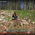 Skriv under mot olaglig avverkning av urskog i Rumänien!