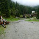 Europeiska kommissionen agerar mot illegal avverkning i Rumänien