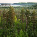 Öppet brev till Estlands regering: Minska på kalavverkningarna, arter dör ut!