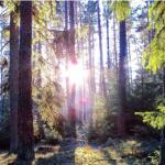 Slutreplik i Altinget:  Oavsett vad Skogsstyrelsen och Sundqvist hävdar är situationen akut