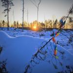 Debatt i Sundsvalls Tidning: Prästskogen vid naturreservatet Haverö strömmar har förvandlats till ett kalhygge