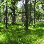 Förslag till lokala miljömål i Mönsterås kommun kan inspirera andra kommuner
