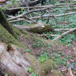 FN:s internationella dag för skogen
