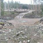 Bedriver kyrkan olaglig avverkning i Mönsterås kommun?