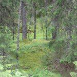 Många röster  i Sveriges Radio om skogsbruket