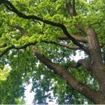 Nu kan skyddsvärda träd rapporteras in i Artportalen