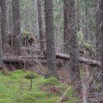 Flera föreningar: Avverka inte gamla naturskogar i Ljusdals kommun