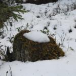 Kommentar: Sveaskog har förstört naturvärden vid Melakträsk-Långtjärnen