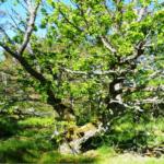 Hotad skog på skärgårdsö i naturreservat i Oskarshamns kommun i Kalmar län