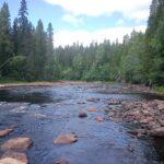 Unika svämskogar i Dalarna avverkas