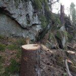 Skydda Skogen polisanmäler Sundsvalls Logistikpark AB: Har ljugit för allmänheten