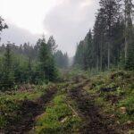 Nya SCA-planen avslöjar framtiden för Petersvik- ligger 200m ut i Alnösundet