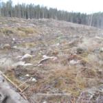 Myndigheters agerande ifrågasätts i reservatsförslag vid Risten i Östergötland