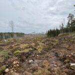 Uppmaning till Södra och myndigheterna: Stoppa avverkningarna i reservatsförslaget Risten i Östergötland