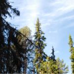 Nytt öppet brev: Sveaskog - hur länge till?