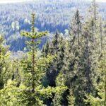 Älskade skogslandskap - farväl?