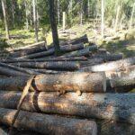 Skydda Skogen till myndigheterna: Ni står inte upp för naturvärdena