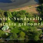 Kortfilm om Petersvik - Sundsvalls sista kustnära grönområde