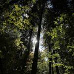 66 forskare i Polen: Elda inte upp mer biobränslen från skogen