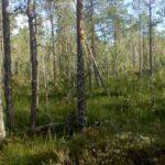 Skydda Skogen får rätt i domstol om avverkningsanmälda skogar