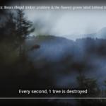 Ikea skandal: Möbler tillverkas av illegalt avverkad skog i Ukraina