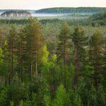 Estländare uppmanar danskar att sluta elda upp estländsk skog