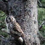 Skogslandskap längs fjällkedjan måste skyddas och restaureras