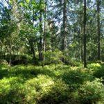 Fin skog vid Bohusleden avverkningsanmäld