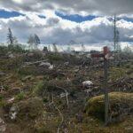 Vandring över hyggen på Sörmlandsleden