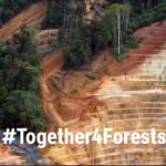 Gyllene tillfälle att stoppa avskogning orsakad av EU:s konsumtion