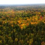 IUCN: Gröna korridorer nödvändiga för att stoppa massutrotning