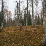 Gör skogarna vid Björkvattnet till naturreservat!