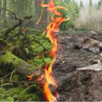 Skriv under namninsamling till EU: Skydda skogarna – elda inte upp dem för att få energi