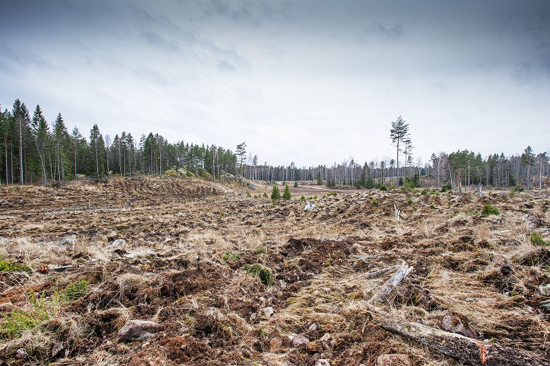 Skogsskövling klassad som grön av EU