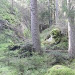 Engagemang för skogsområde i Småland - blev nyckelbiotop i december 2020