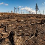 """Skydda Skogen lämnar feedback till EU: Biobränslen och kalhyggen inte """"hållbart"""""""