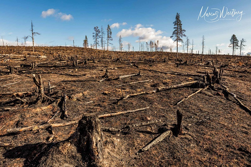 EUs taxonomi måste utesluta skogsbruk och bioenergi