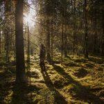 """Nu försvinner det gamla skogslandskapet – i rasande fart: """"Katastrof"""""""