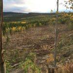 Tankar om skog: Skulle våra förfäder likna våra ensartade trädåkrar vid skog?