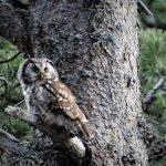 Skydda Skogens Årskrönika för 2020
