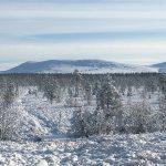 Skydda Skogen önskar God Jul och Gott Nytt År
