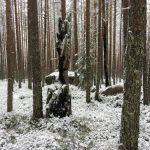 """Protestbrev till Skogsstyrelsen: """"Ni agerar inte för naturvård!"""""""