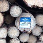 Skydda Skogen: EU måste sluta subventionera biobränsle!